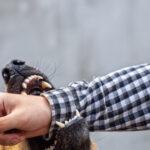 Come difendersi dagli animali feroci