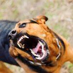 Spray al peperoncino contro i cani