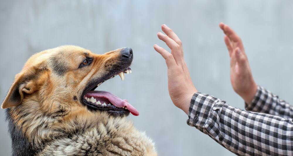 Proteggersi dall'attacco dei cani